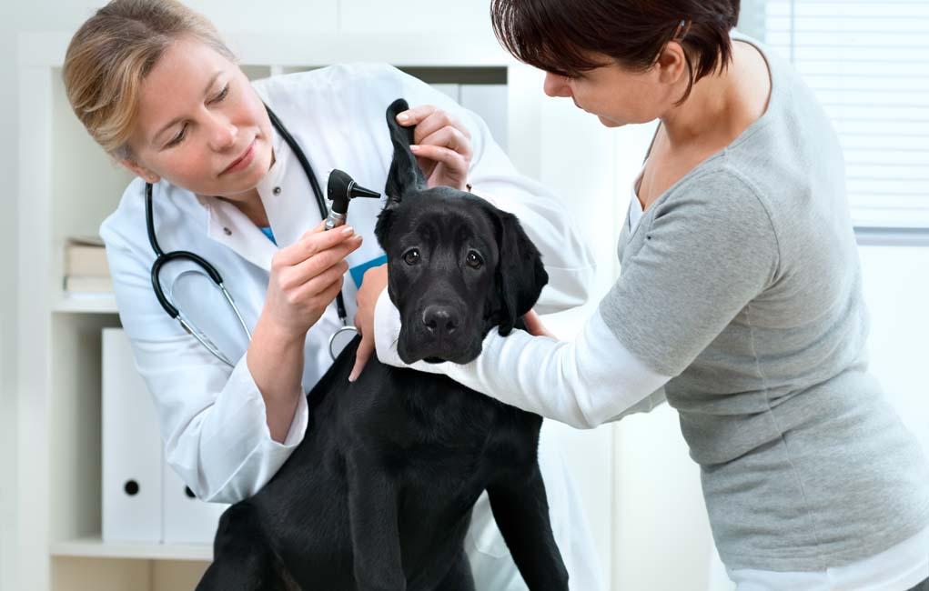 профессиональная помощь врачей в лечении самых сложных болезней