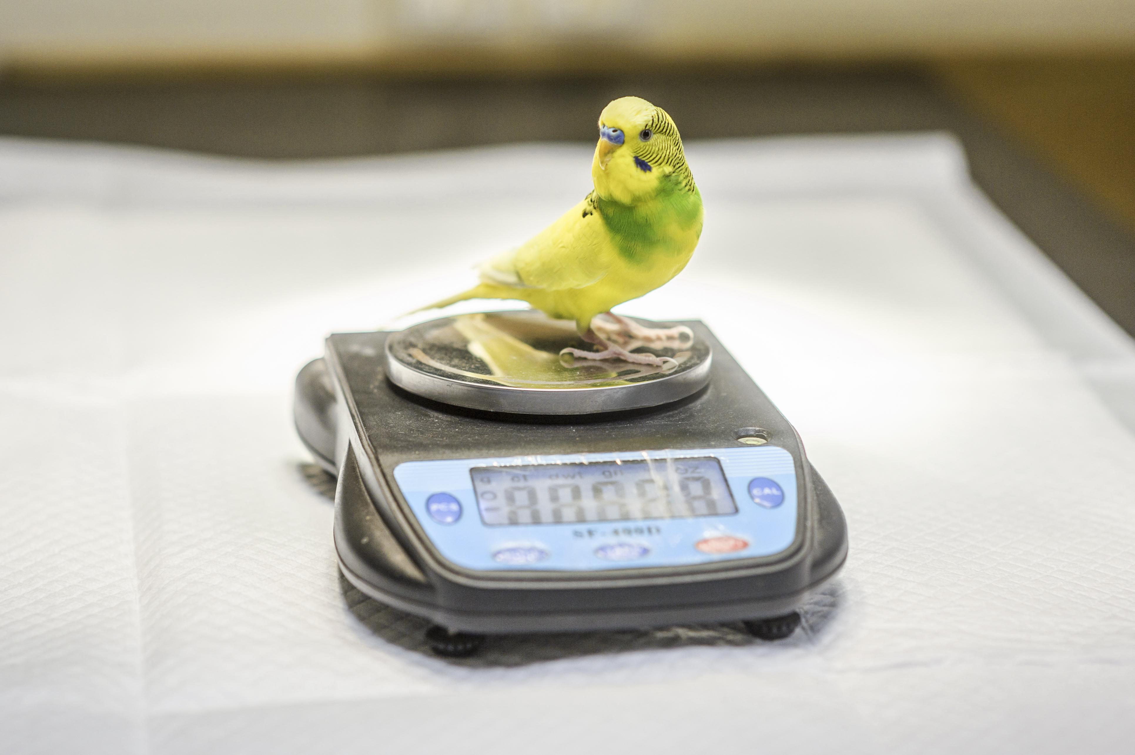 Лечение домашних декоративных видов птиц