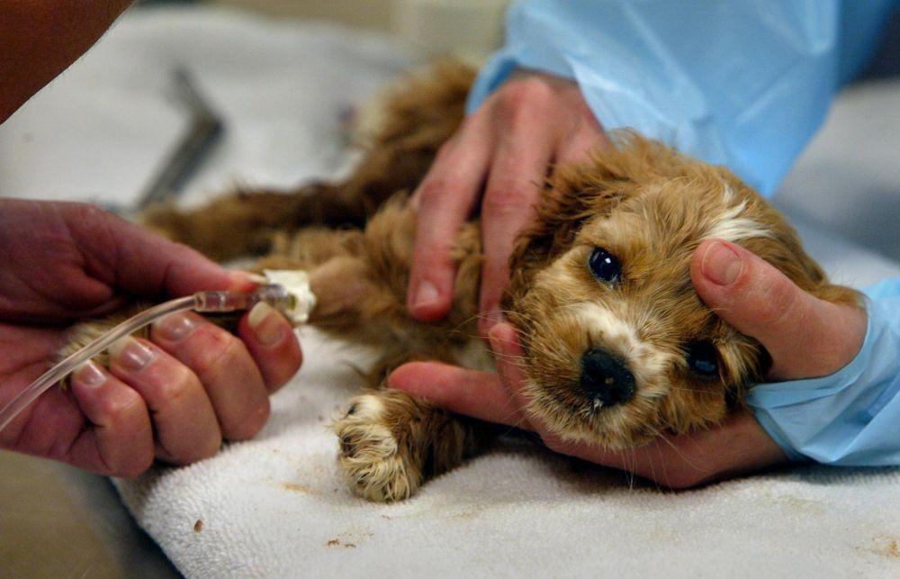 Вакцинация домашних животных в районе города Москвы