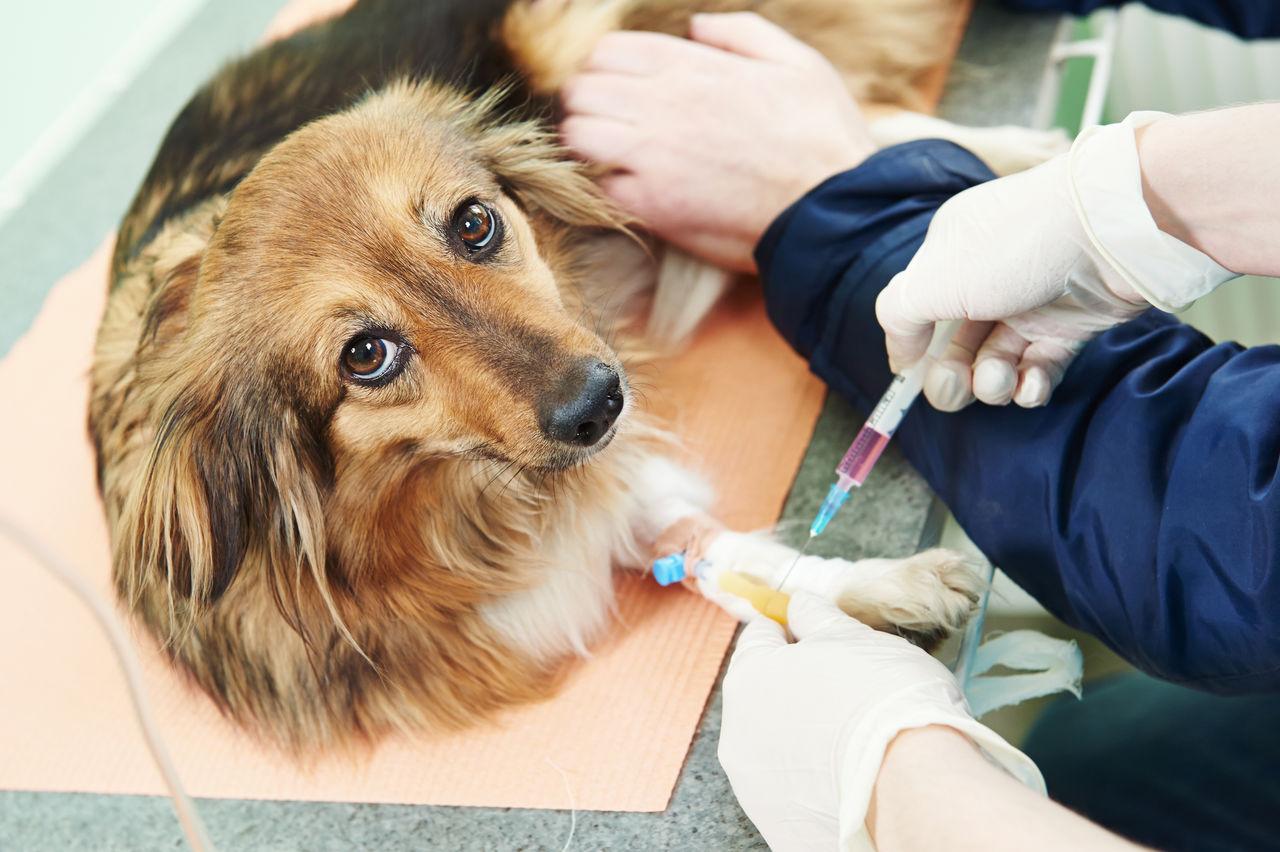 """Процедура кастрации домашнего животного в стенах клиники """"Айболит"""""""